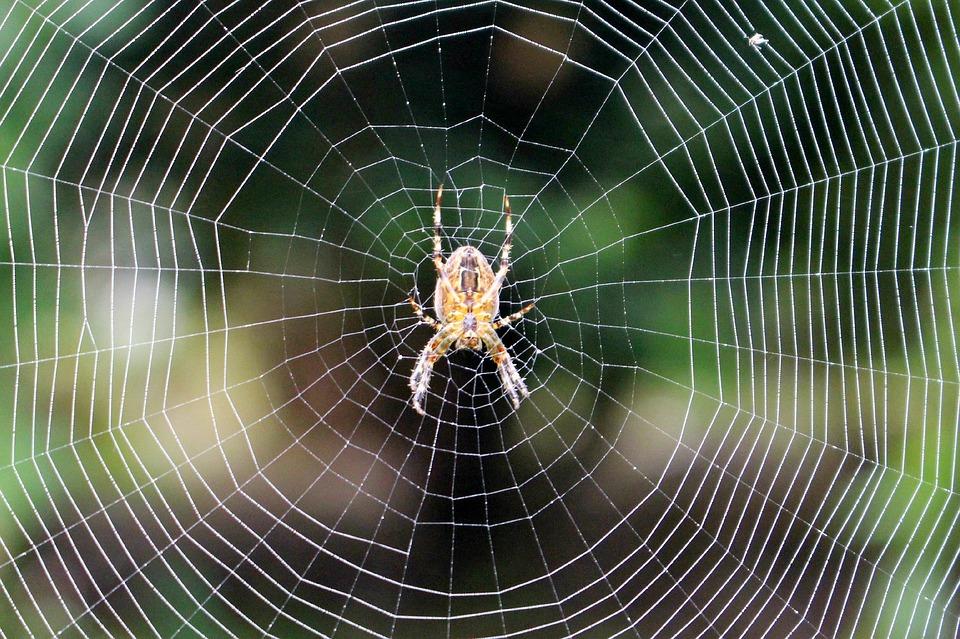 spider-1195429_960_720