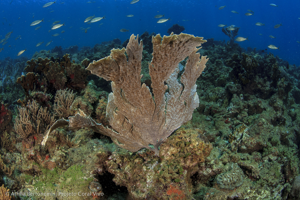 Biodiversidade-marinha-da-Costa-do-Descobrimento_creditoAthilaBertoncini