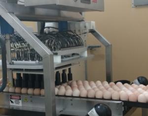 injencao-ovos