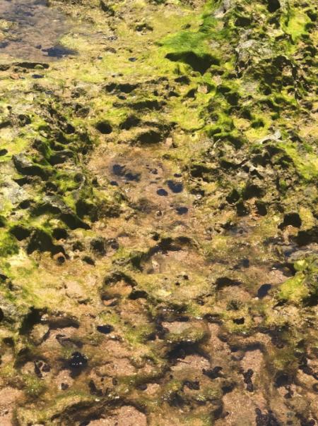 Pesquisas mais recentes indicam que houve perda de patrimônio natural com a redução no número de animais, redução na diversidade de animais e aumento das doenças/mortalidade nos corais em regiões atingidas pelo óleo no litoral norte da Bahia