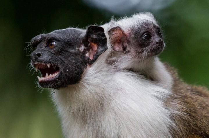 São 4.209 espécies animais ameaçadas nas próximas duas décadas, entre mamíferos, aves, répteis e anfíbios
