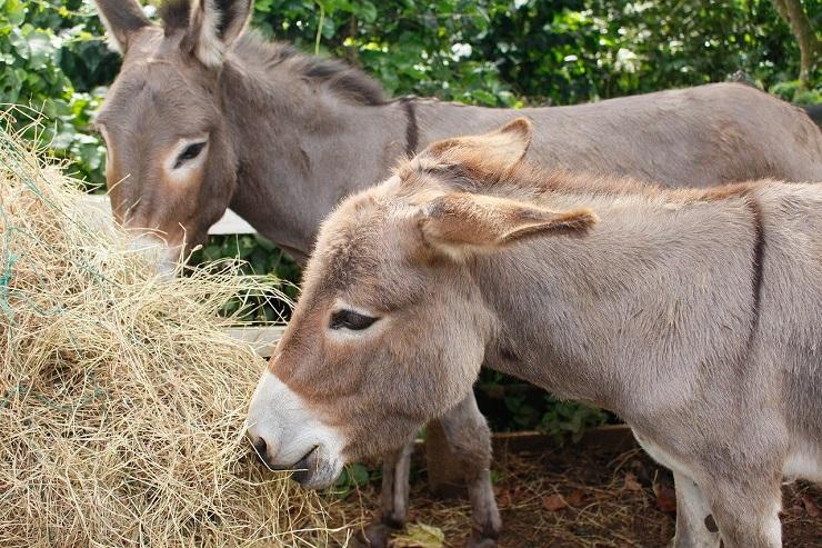 donkey-3801863_1280