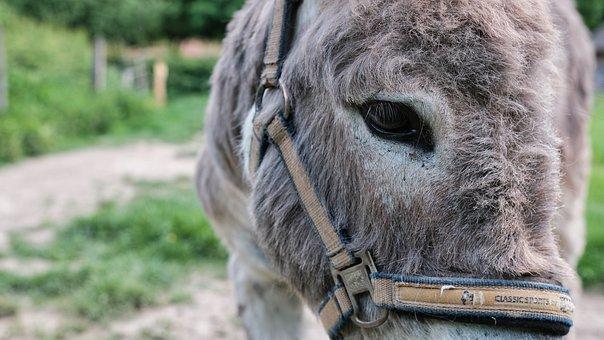 donkey-6481641__340